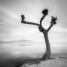 "Old Tree - <a href=""http://www.martinrak.cz"">www.martinrak.cz</a>  <a href=""https://www.instagram.com/martinrakphoto"">I N S T A G R A M</a> | <a href=""https://www.facebook.com/martin.rak.photography"">F A C E B O O K</a>"