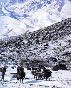 Shepherds gather firewood on a high pass near Balti region Pakistan near K2. Photo from my book #VanishingAsia #Pakistan