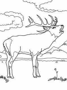 Elk Coloring Pages - Best Coloring Pages For Kids