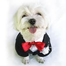 This is what my dog will be wearing.