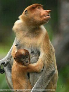 ➡ www.facebook.com/NaturalezaYMundoAnimal/ Monos del mundo! 🐵🐒 ➡ www.instagram.com/NaturalezaYMundoAnimal/ -- #animales #naturaleza #animals #nature #monkeys #monos