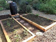 These great garden beds have been build in a back yard in Los Angeles to house about 45 chilli peppers. A series of EasiOyYa's are connected back to the rain barrel so the owner can go away for weeks at a time confident to know that the plants have access to all the moisture they need 24/7. Since the water is delivered by these ollas straight into the root zone, there is no run off and minimal evaporation.