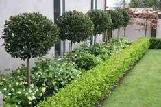 Front Yard Design, Modern Front Yard, Modern Garden Design, Contemporary Garden, Modern Design, Landscape Plans, Landscape Architecture, Front Garden Landscape, Landscape Designs
