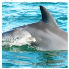 """Many people have said that dolphins have a """"magical healing power"""" - describing their experience as exhilarating and inspiring."""