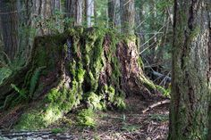 Even a dead stump is adorned with lush life
