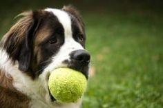 apprendre ordre lache ou donne à son chien