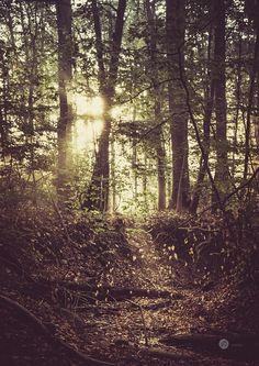 Farbwechsel im herbstlichen Wald – Naturfoto