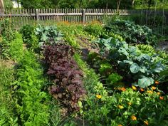 Turn Poor Soil into a Thriving Garden with Lasagna Gardening Small Space Gardening, Small Gardens, Outdoor Gardens, Vertical Gardens, Gardening For Beginners, Gardening Tips, Growing Blueberries, Starting A Vegetable Garden, Companion Planting