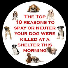 The top 10 reasons to spay or neuter your dog were killed at a shelter this morning!