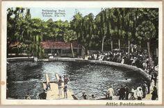 Swimming Pool at Sulphur Springs, Tampa, Florida.