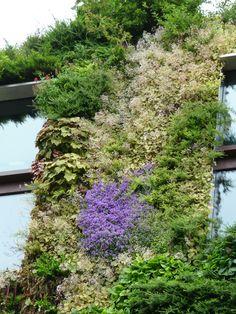 Mur végétal de Patrick Blanc au Musée du Quai Branly, Paris 7e (75), 10 juin 2012, photo Alain Delavie  http://www.pariscotejardin.fr/2012/06/le-mur-vegetal-du-musee-du-quai-branly-paris-7e-au-printemps/