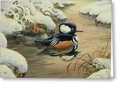 Hooded Mergansers On A Pool Greeting Card by Carl Donner