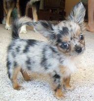 awwwe.. i want him!