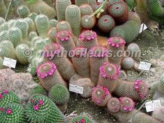 Cactus and Succulents 496