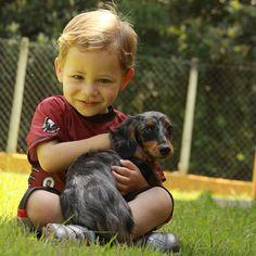 João and his new friend.  #dog #salatino #clubesalatino #canil #perro #dogs #cute #love #nature #animales #cute #filhote #dachshund #teckel #golden #dachshundlonghair #dach #teckelpelolongo #filhote