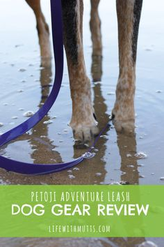 Petoji Leash & Collar Review