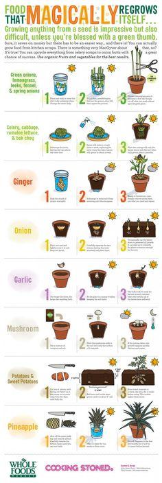 Wist je dat je van sommige etensresten nieuwe planten kunt maken? Op deze afbeelding zie je hoe je dat kunt doen. Leuk als experiment voor in de klas!