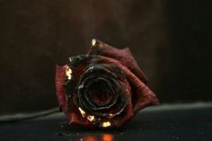 Image discovered by m. Find images and videos about photography, grunge and flowers on We Heart It - the app to get lost in what you love. Story Inspiration, Writing Inspiration, Character Inspiration, Tattoo Inspiration, Vampire Knight, Dragon Age, Burning Rose, Burning Flowers, Fall Out Boy