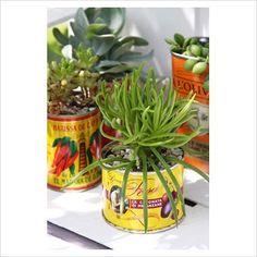 Unusual planter ideas...