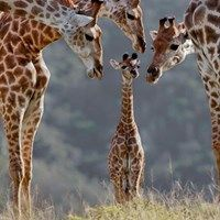 Family's Always There to Help Us Stand Tall