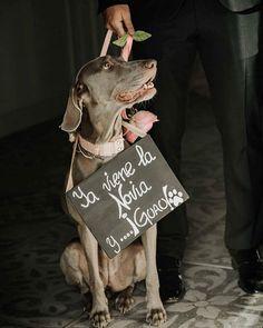Feliz día del perro fotografía por @elojoencantado . . #fabricadelasuerte #bodas #boda #bodasespaña#bodas2019 #love #inlove #amor #eventos #bodasdeverano #perros #diadelperro