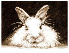 Art Pencil Sketch Rabbit Art Rabbit Sketch Bunny by cmqstudio Animal Drawings, Art Drawings, Drawing Animals, Drawing Art, Animal Paintings, Pencil Drawings, Lapin Art, Rabbit Tattoos, Rabbit Art