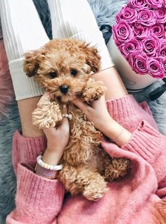 Gifts For Dog Lovers :) for Cute dogs and puppies Super Cute Puppies, Cute Dogs And Puppies, Little Puppies, Baby Dogs, Doggies, Tiny Puppies, Fluffy Puppies, Baby Animals Pictures, Cute Animal Pictures