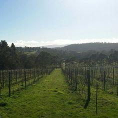 Our vineyard views #winterbrookvineyard