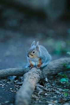 Animals Of The World, Animals And Pets, Baby Animals, Funny Animals, Animals Planet, Cute Animals, Secret Squirrel, Zoology, Chipmunks