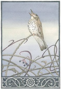 The Darkling Thrush - Ink and watercolor painting by Carrie Wild