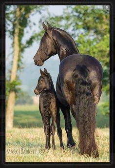 Cute Mare & Foal pic
