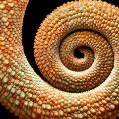 spiral by Mark Bridger