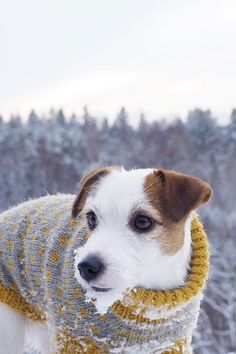 Cute jackrussel terrier in a winter sweater. Dog photography, adventuring with dog.