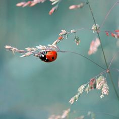 Ladybugs are the only bug I will tolerate simply because I know they cannot harm