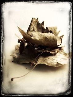"~ Autumn ~ ""The last dead leaves of fall crackled underfoot, winter-crisp."" ~ Neil Gaiman, American Gods"
