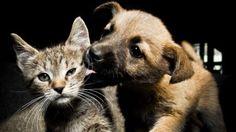 Cães e gatos: o animal de estimação preferido pode ter relação com a personalidade de seu dono