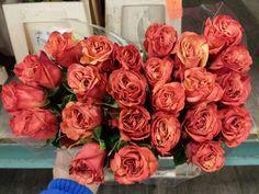 #Rose # Ecuador #Giotto  Available at www.barendsen.nl