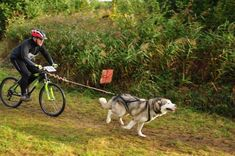 Bikejoring with your dog. This would be awesome. Leia is the fastest dog in town!