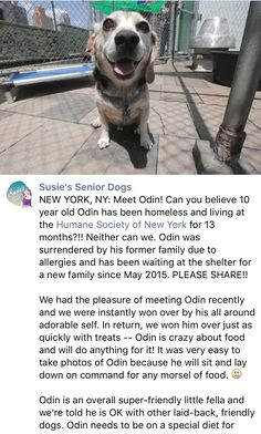 6/27/16 PLEASE SHARE ODIN!! HE'S WAITED 13 MONTHS!! NEW YORKERS!!! COME ON!! HE'S GEORGEOUS /ij  https://m.facebook.com/story.php?story_fbid=649108181912488&substory_index=0&id=272349689588341&__tn__=%2As