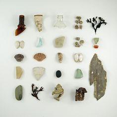 Natural History Board