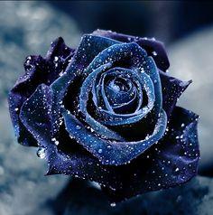 Dark blue....lovely