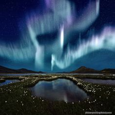 Northern Lights over a marsh landscape in Iceland