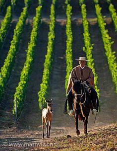 Una impresionante imagen de una viña en Casablanca, en el valle central de Chile.