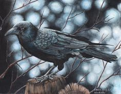 Hey, I found this really awesome Etsy listing at https://www.etsy.com/listing/218001367/the-raven-5-x-7-fine-art-print-by-laura