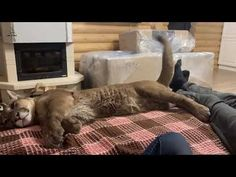 Puma Messi and the talking tail. Love Affair, Messi, Folk, Funny Things, Youtube, Funny Humor, Animales, Ha Ha, Fun Things