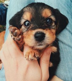 Image about cute in bellos animales by Cute Baby Animals, Animals And Pets, Funny Animals, Wild Animals, Cute Puppies, Cute Dogs, Dogs And Puppies, Doggies, Cutest Small Dogs