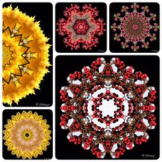 Mandalamix kreativesbypetra Petra, Collagen, Wreaths, Halloween, Decor, Mandalas, Macro Photography, Mosaics, Abstract
