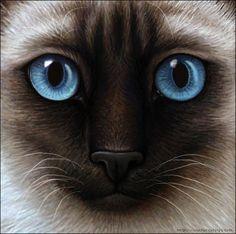 Warrior Cats - Siamese Cat by Wynnyelle.deviantart.com on @deviantART