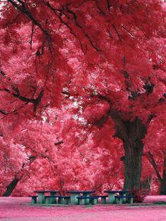 beautiful tree???