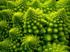 """Romanesco Broccoli    """"This variant form of cauliflower is the ultimate fractal vegetable. Its pattern is a natural representation of the Fibonacci or golden spiral, a logarithmic spiral where every quarter turn is farther from the origin by a factor of phi, the golden ratio."""""""